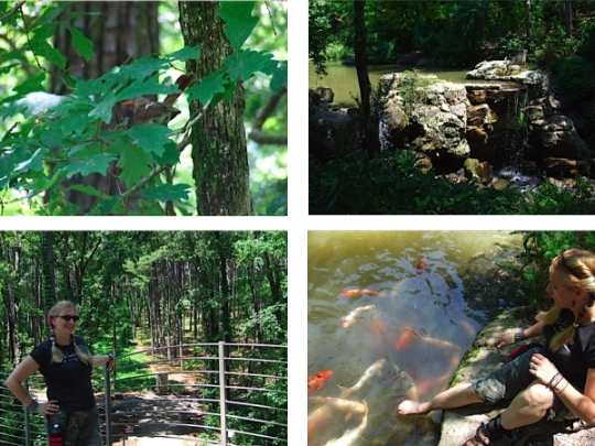 Garvan Woodland Gardens was one of the highlights of our trip to Hot Springs!