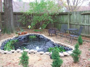 The backyard goldfish and koi pond the traveling twosome for Koi ponds near me