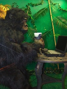 The trendy coffee shop and wifi culture has even passed over into the animal kingdom.