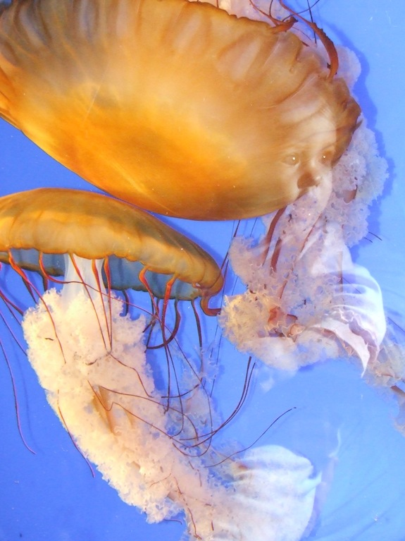 The wonder of jellyfish