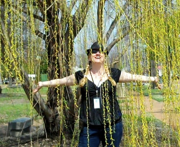 It's raining Weeping Willow!