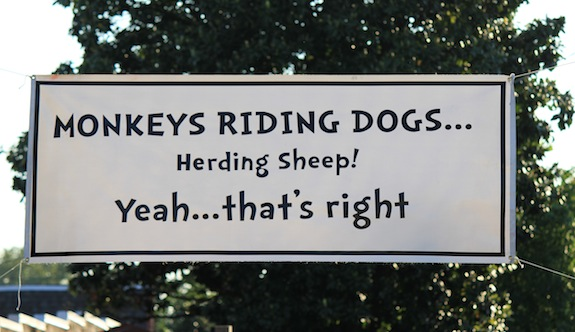 Mokeys Riding Dogs Herding Sheep???  And you thought Char and I were wild!